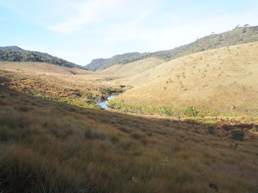 Trekking Horton Plains-a landscape view of horton plains