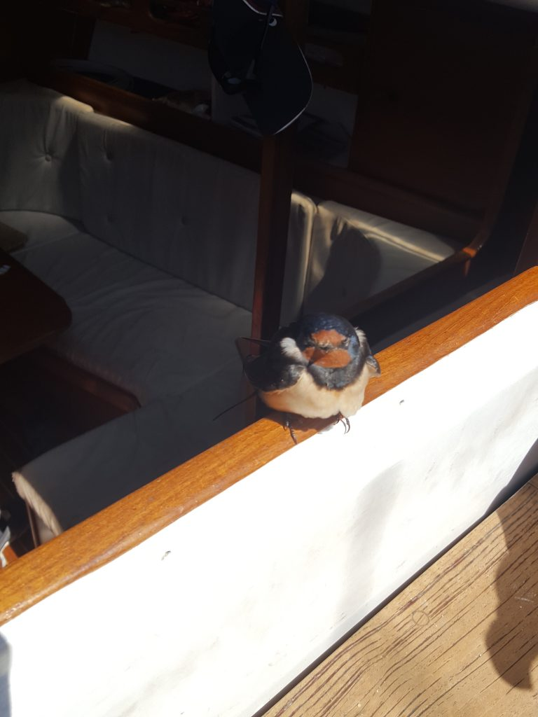 A little swallow on the boat