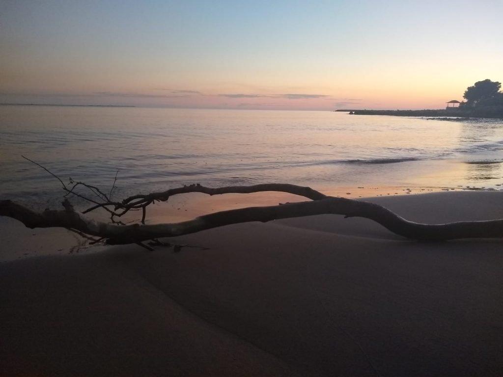 sunrise across the beach with driftwood in sant carles de la rapita