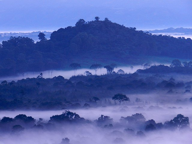 Misty sunrise over the Kakamega rainforest in Kenya
