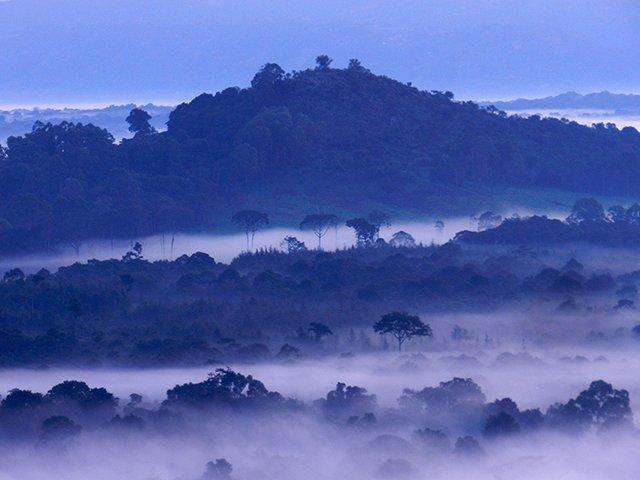 Misty sunrise over the Kakamega rainforest in Kenya