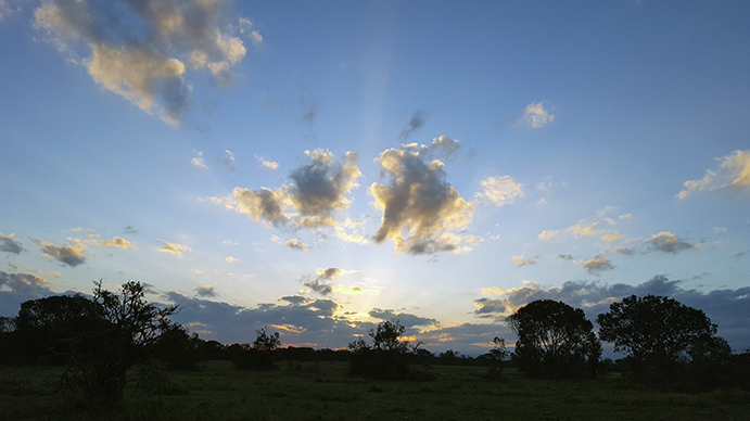 Sunrise at Ol Pejeta safari