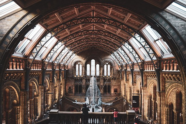 The impressive interior of Londons natural history museum in london