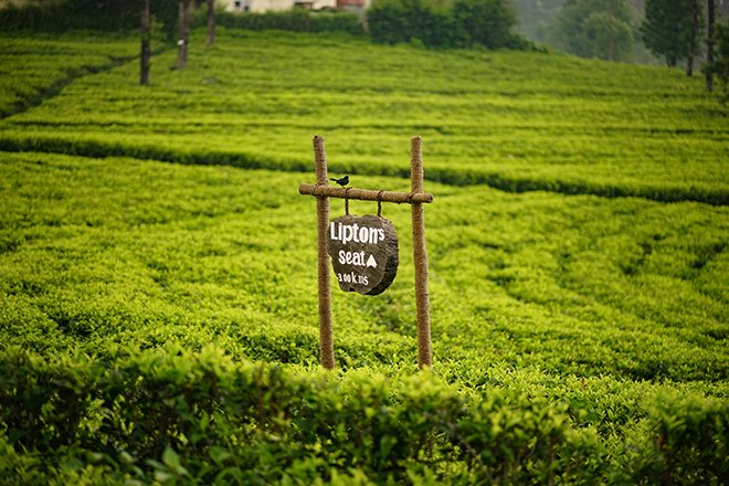 Lipton's seat tea fields in sri lanka