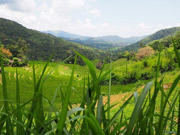 Rice terraces and mountain walks in sri lanka