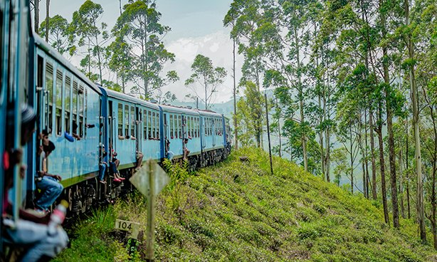 a blue train snaking it's way through the tea fields and forests of sri lanka