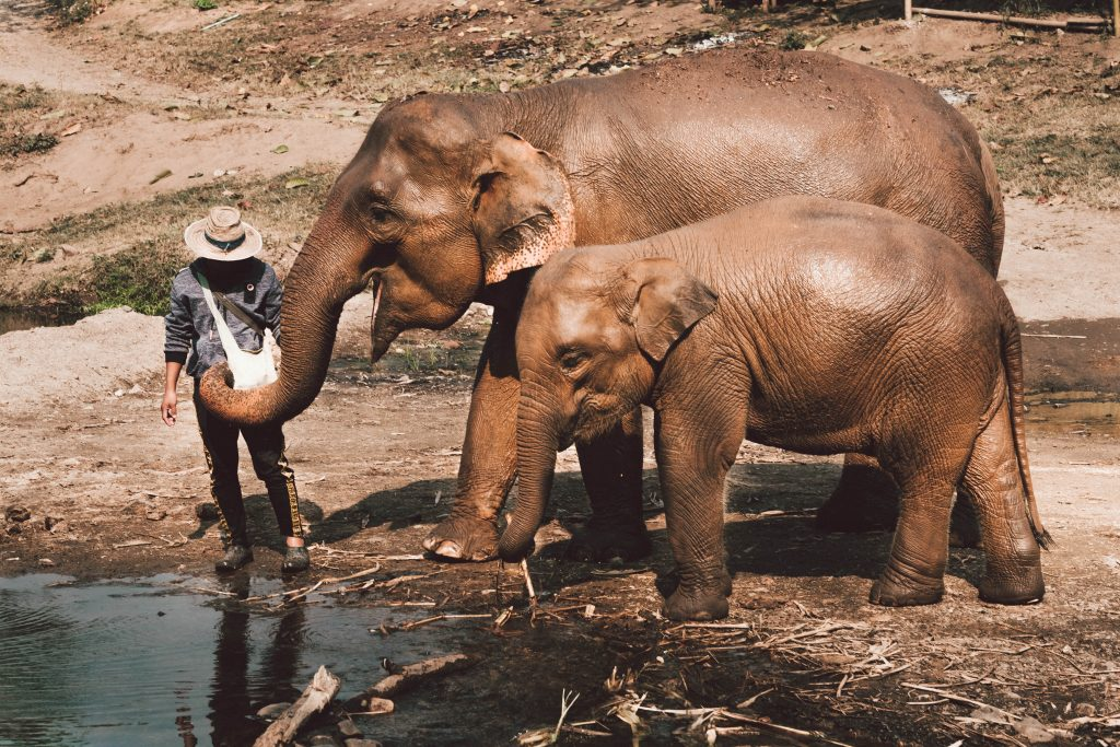 an elephant sanctuary that didn't make the list for one of the most beautiful places in kandy