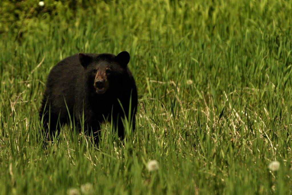 A BEAR IN CHITWAN NATIONAL PARK