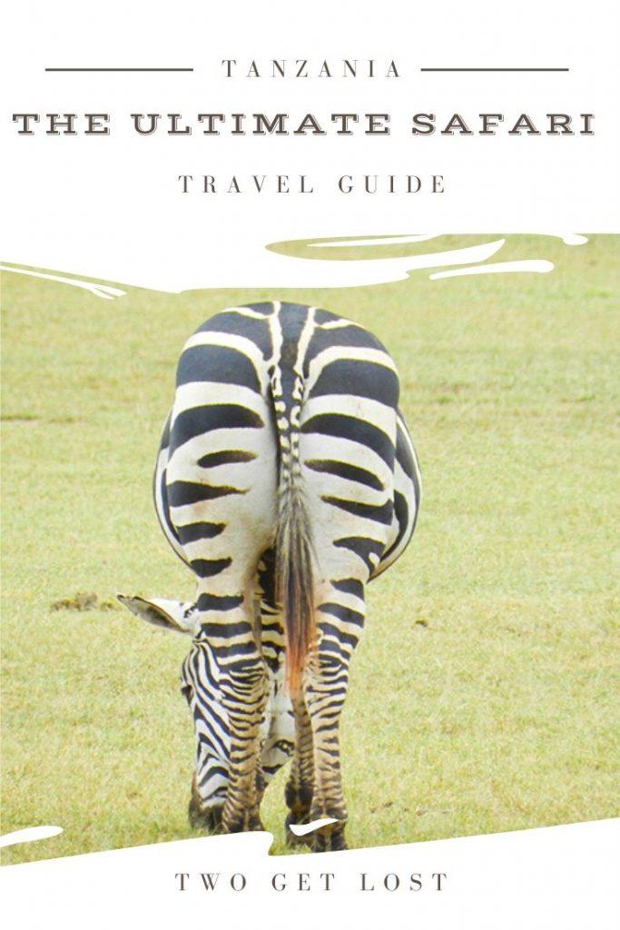 A zebra in tanzania safari park