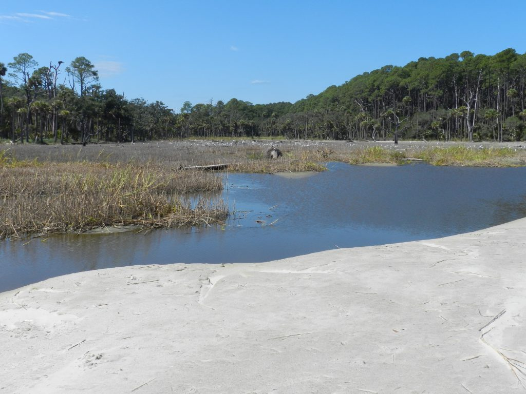 birdwatching at a lagoon in hunting island state park sc