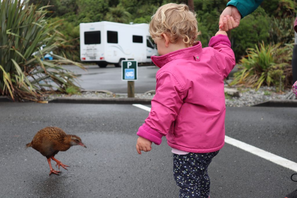 a baby in new zealand talking to the birds