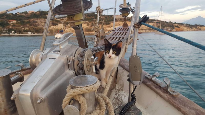 cats on a boat checking the anchor