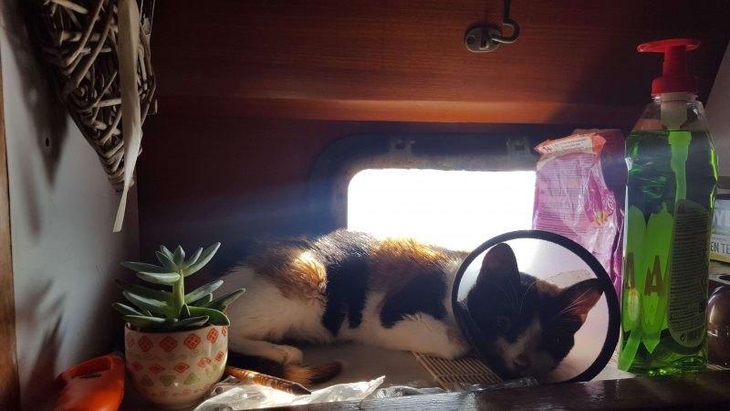 a cat with a collar sat on a boat windowsill