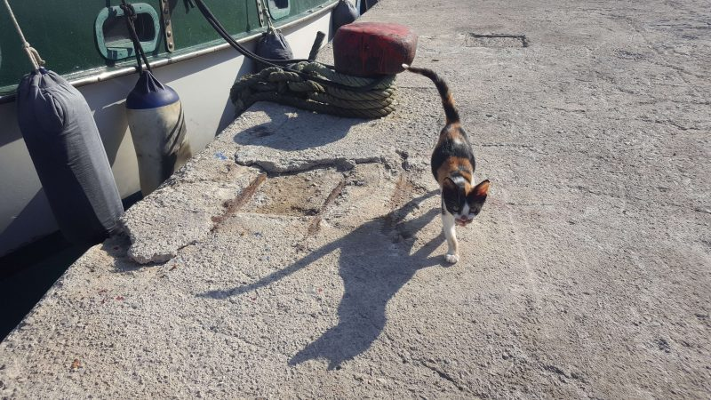 a boat cat walking on the town quay