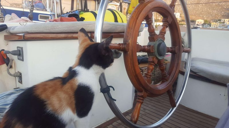 a cat looking at the helm of a sailboat