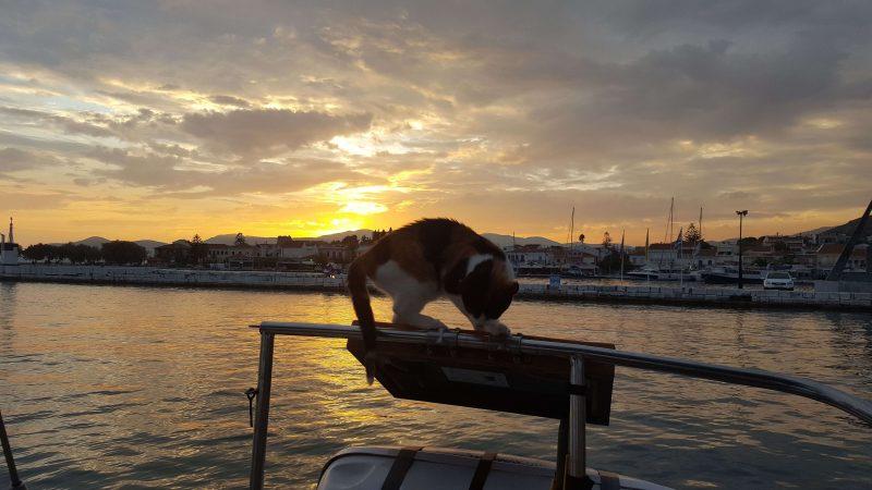 a tiny cat on a sailboat balanced on a solar panel