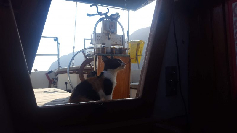 a cat on a sailboat keeping watch