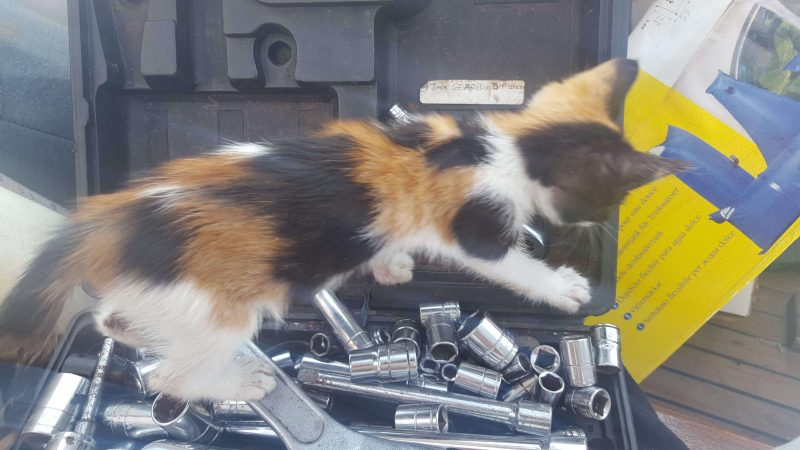 a tiny cat on a boat looking at tools