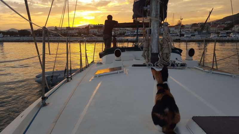 a man and his cat watching the sunset from a sailboat