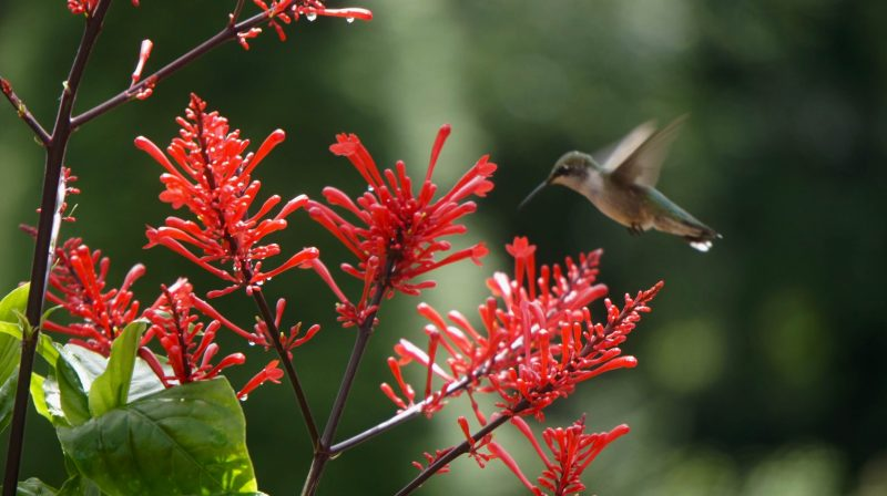a humming bird on a flower