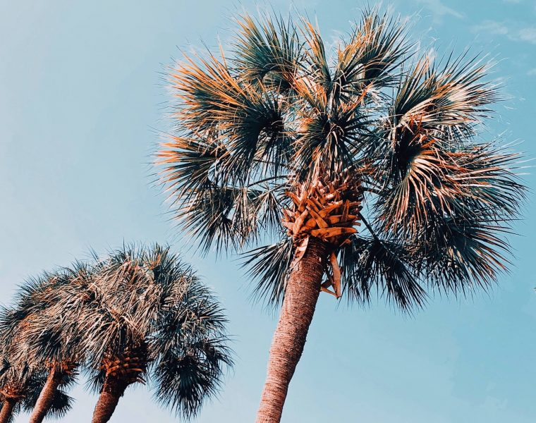 palm trees found on a weekend in charleston sc