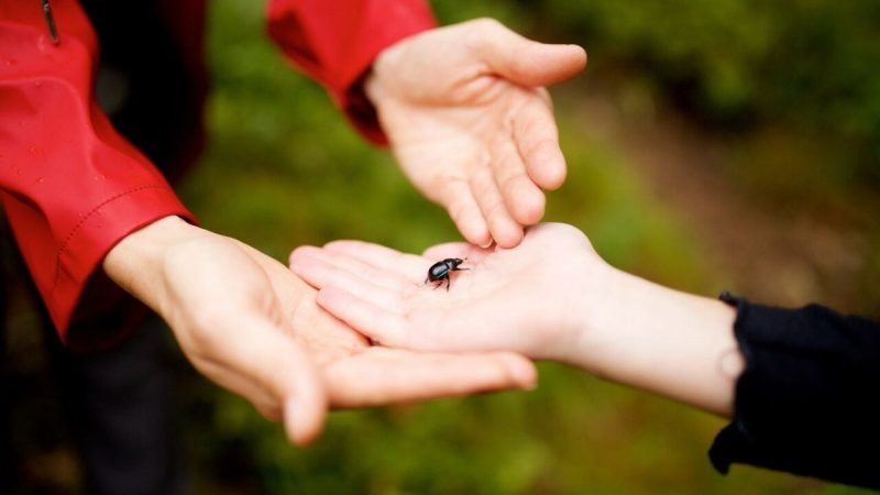 children playing with a beetle in an imaginative hook for a lesson