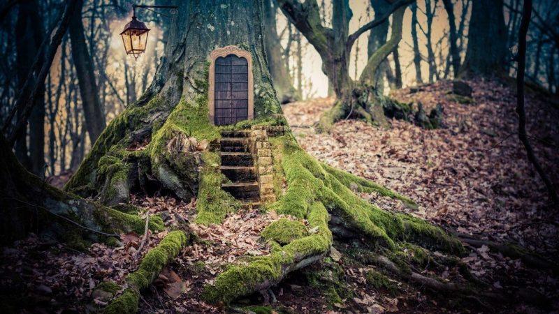 a fairy door in a woodland tree