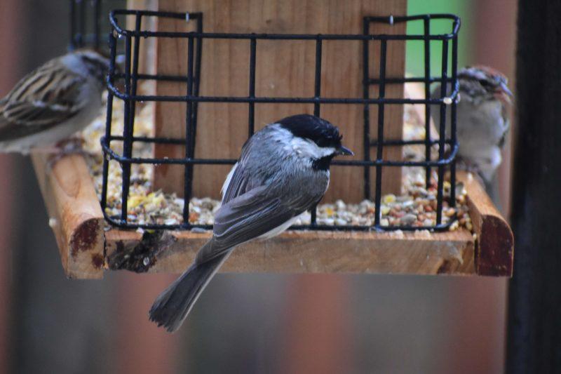 birds on a bird feeder!