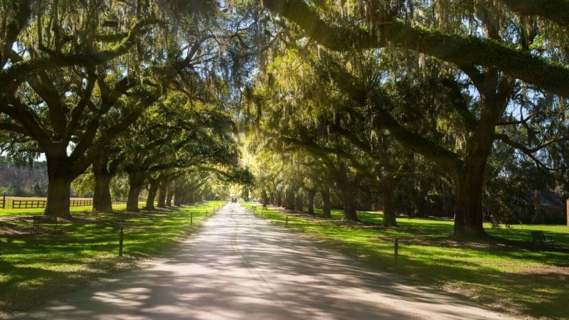 The avenue of oaks is one of the most photographed places in Charleston SC