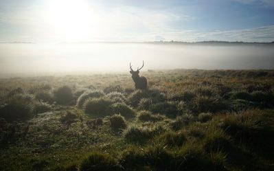 the silhouette of a deer against the sunrise in sri lanka